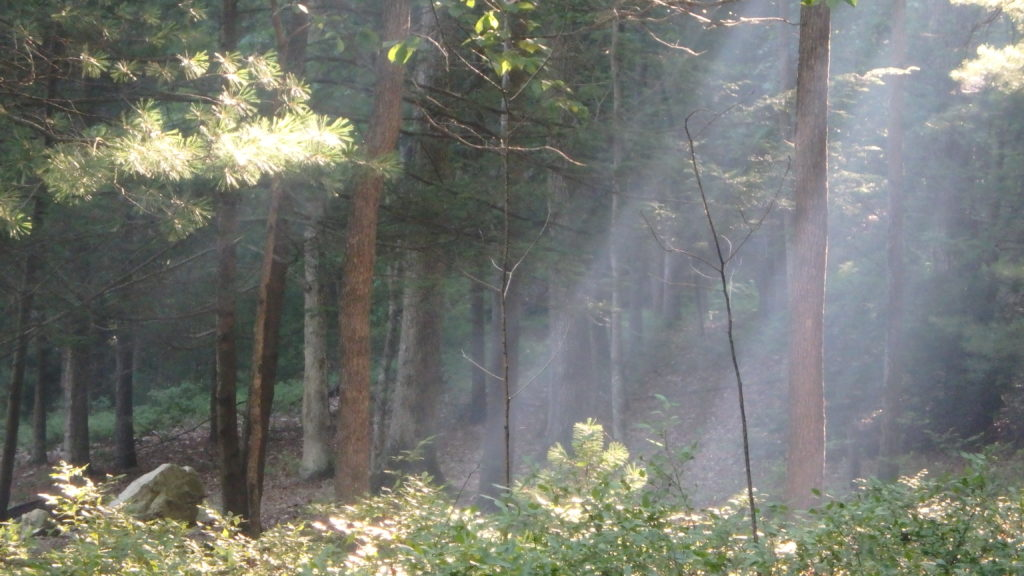 Sunbeams and Wood Smoke